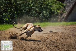 Making Something Illegal Doesn't Stop It: NSW Greyhound Racing